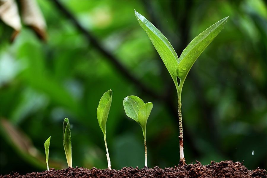 Demystifying Growth – The One Crucial Ingredient That's Often Overlooked